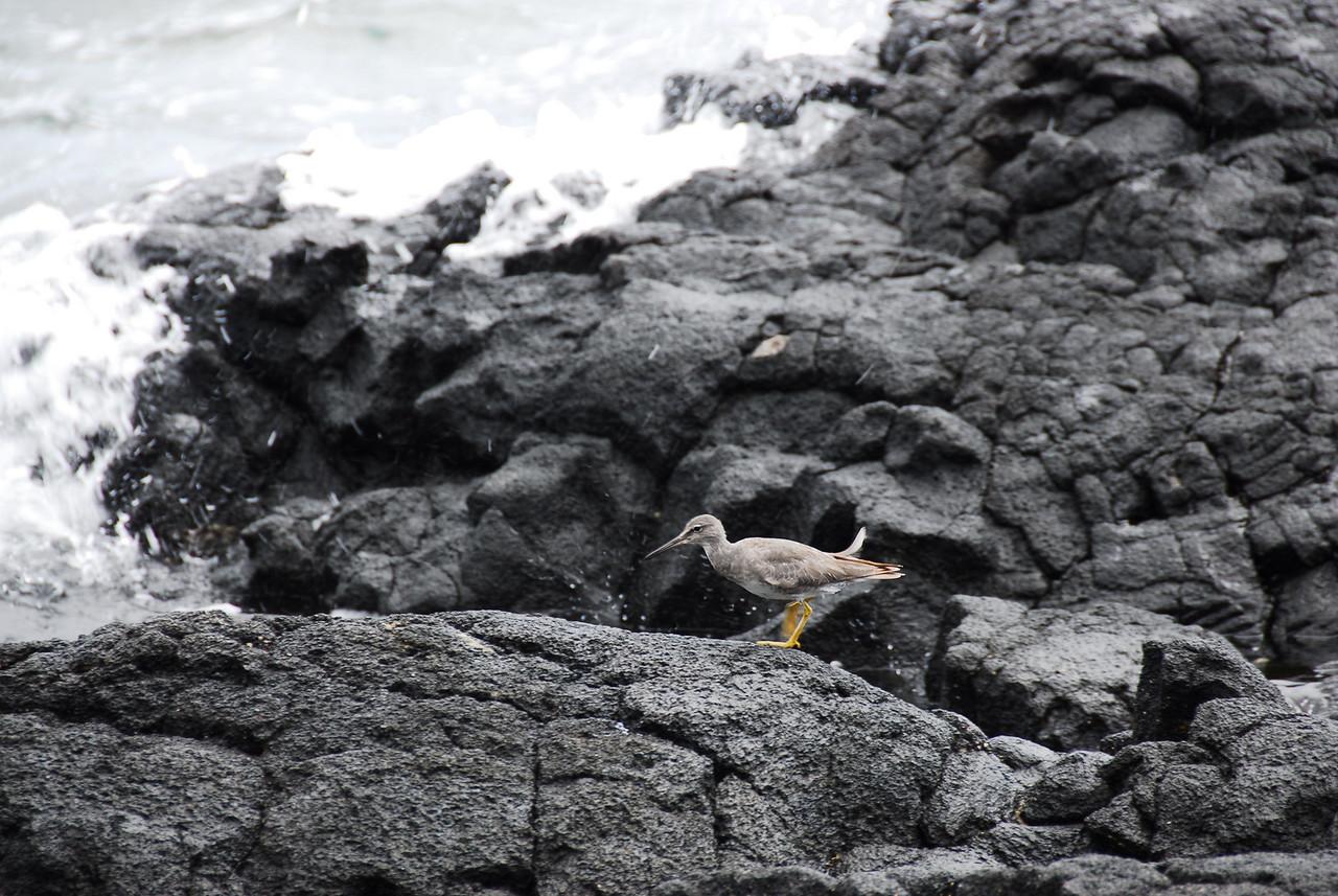 Rocky coast in Puʻukoholā Heiau National Historic Site, Hawaii