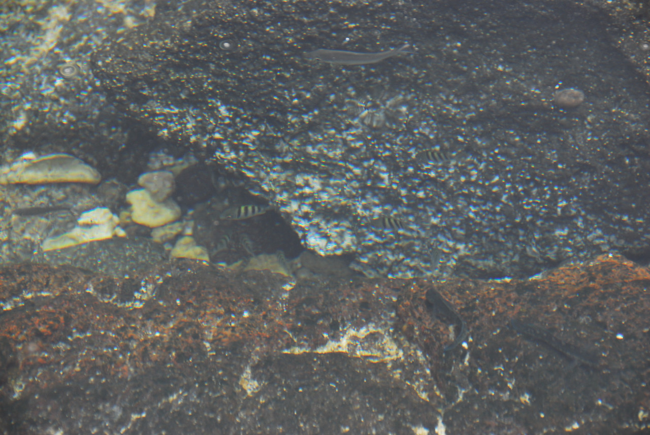 Fish at Puʻukoholā Heiau National Historic Site, Hawaii