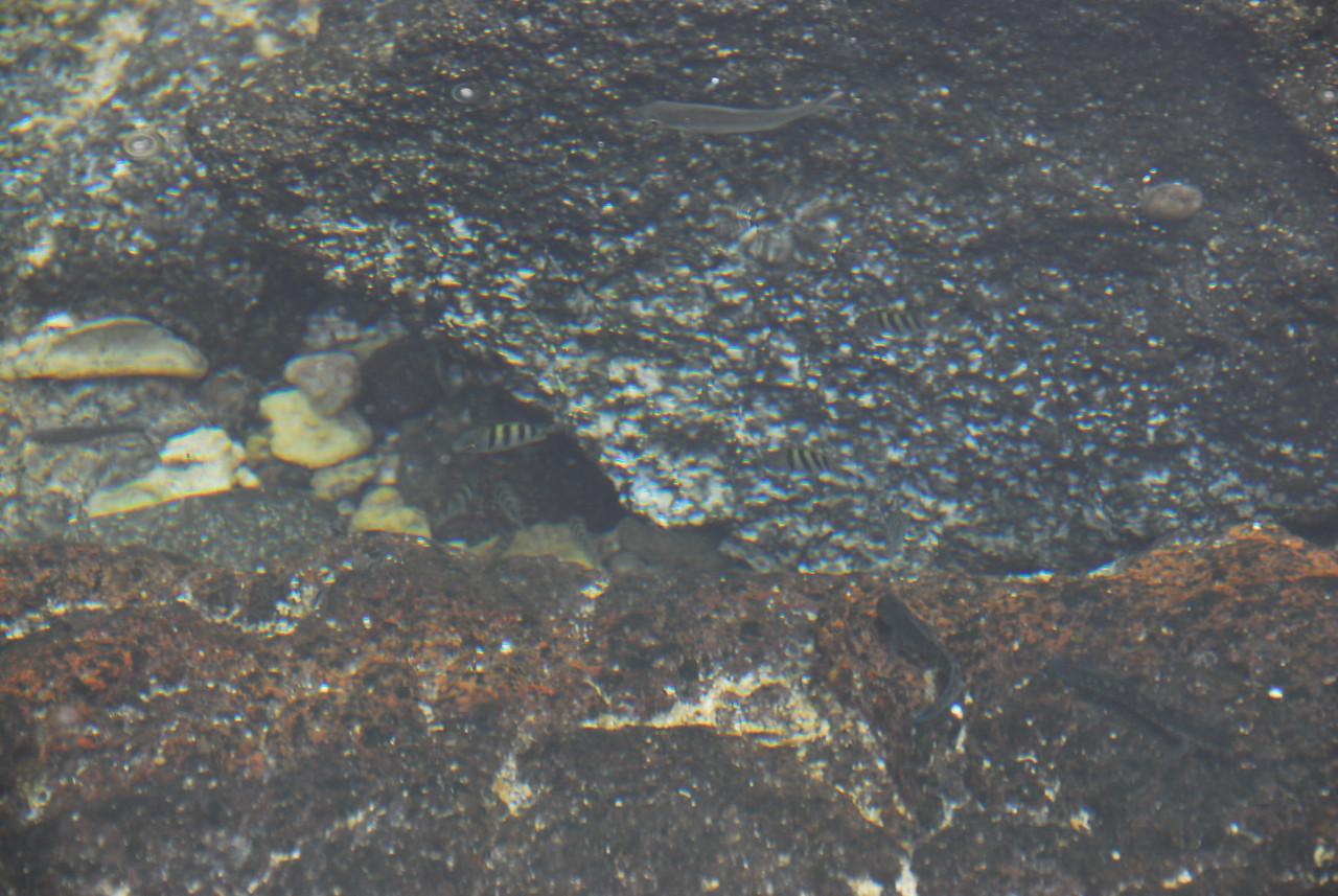 Fish at Puʻukoholā Heiau National Historic Site, Hawaii