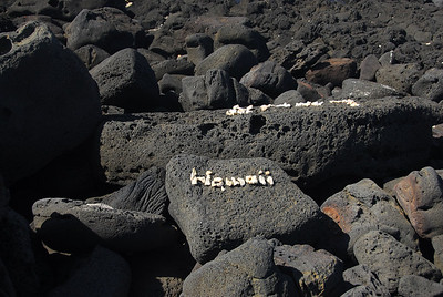 Rocks on the shore - South Point, Hawaii