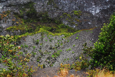 Flora at Volcanoes National Park, Hawaii