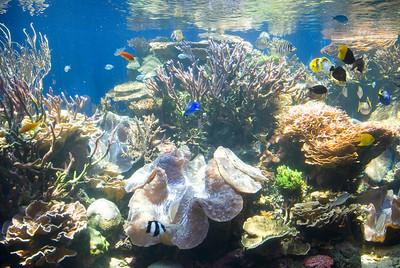 Waikiki Aquarium Coral