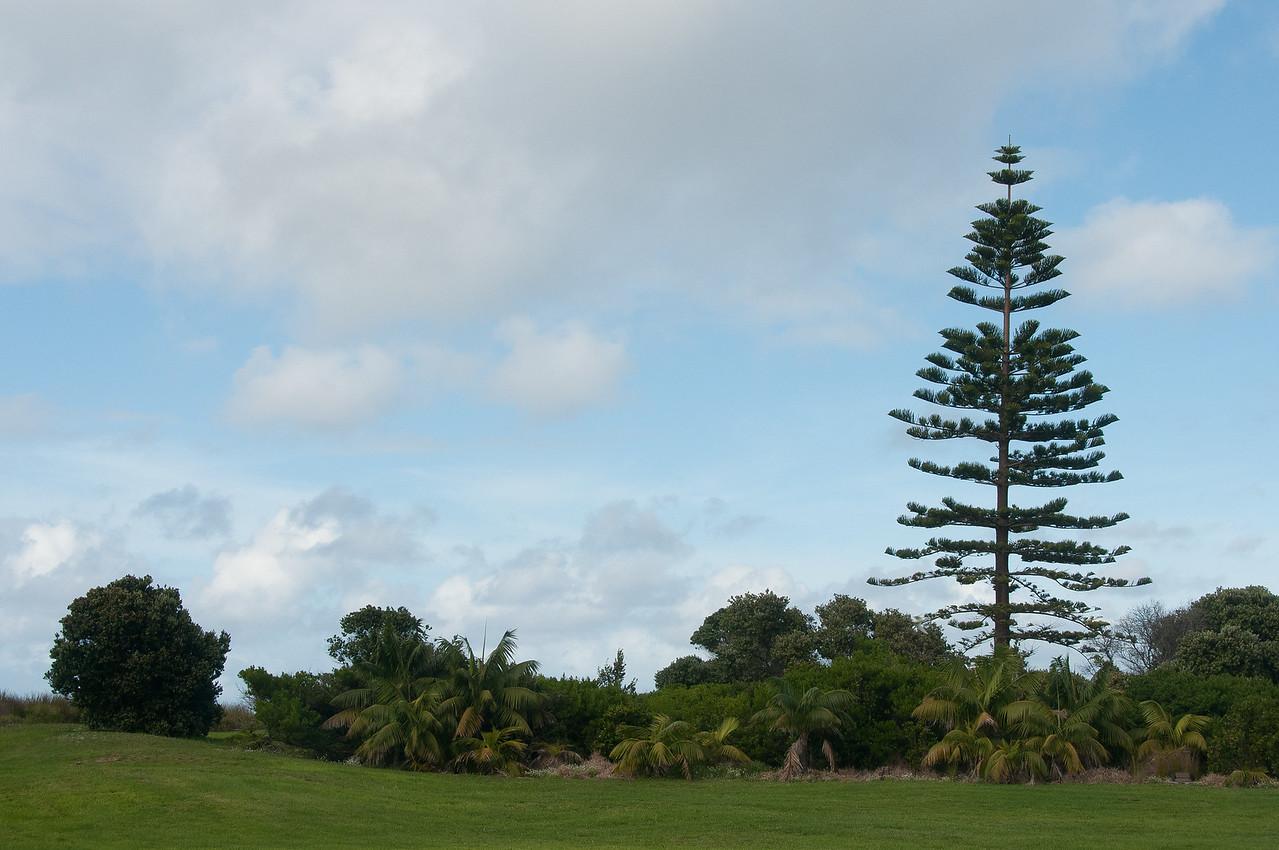 Landscape in Lord Howe Island