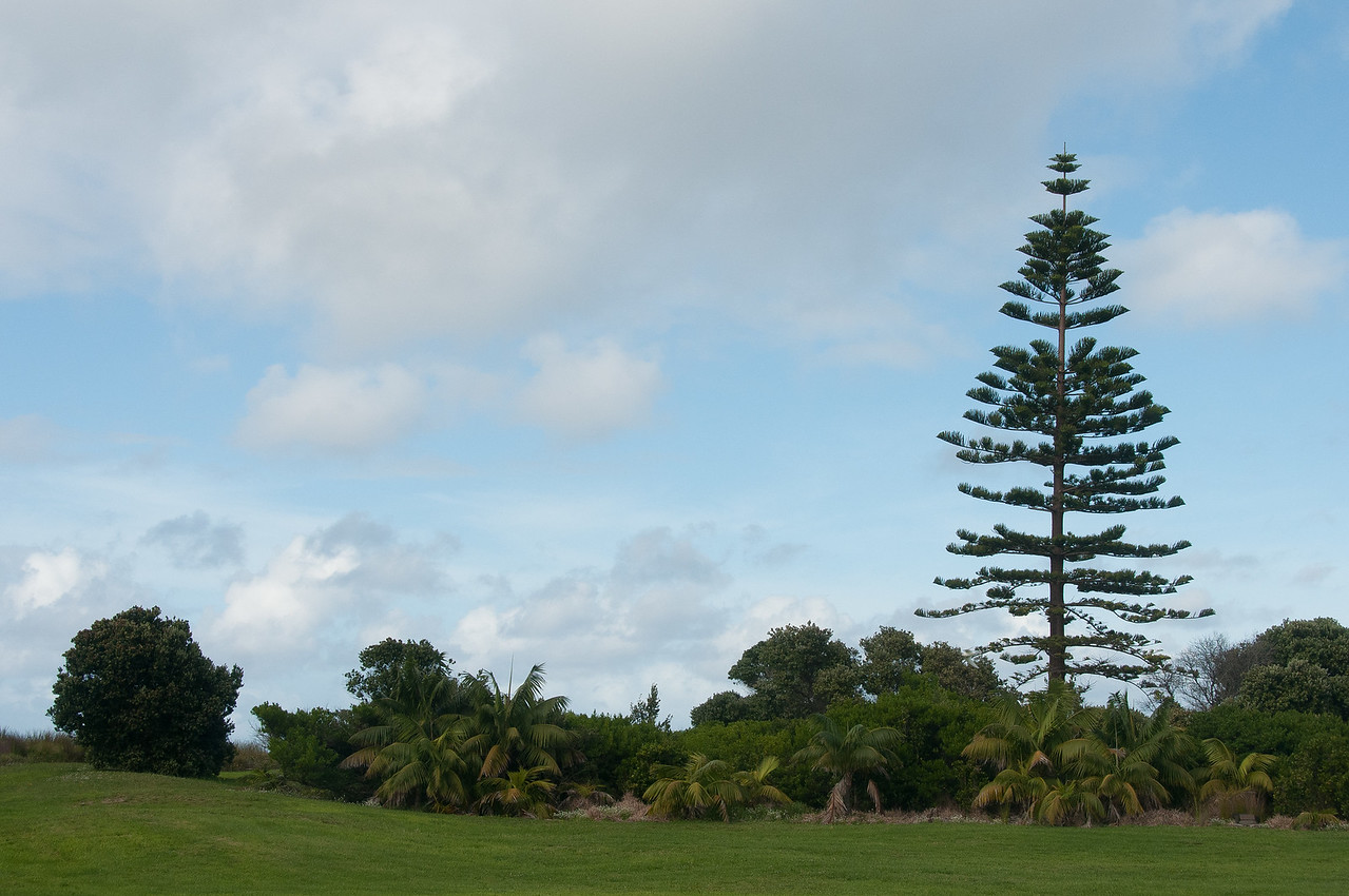 Landscape in Lord Howe Island