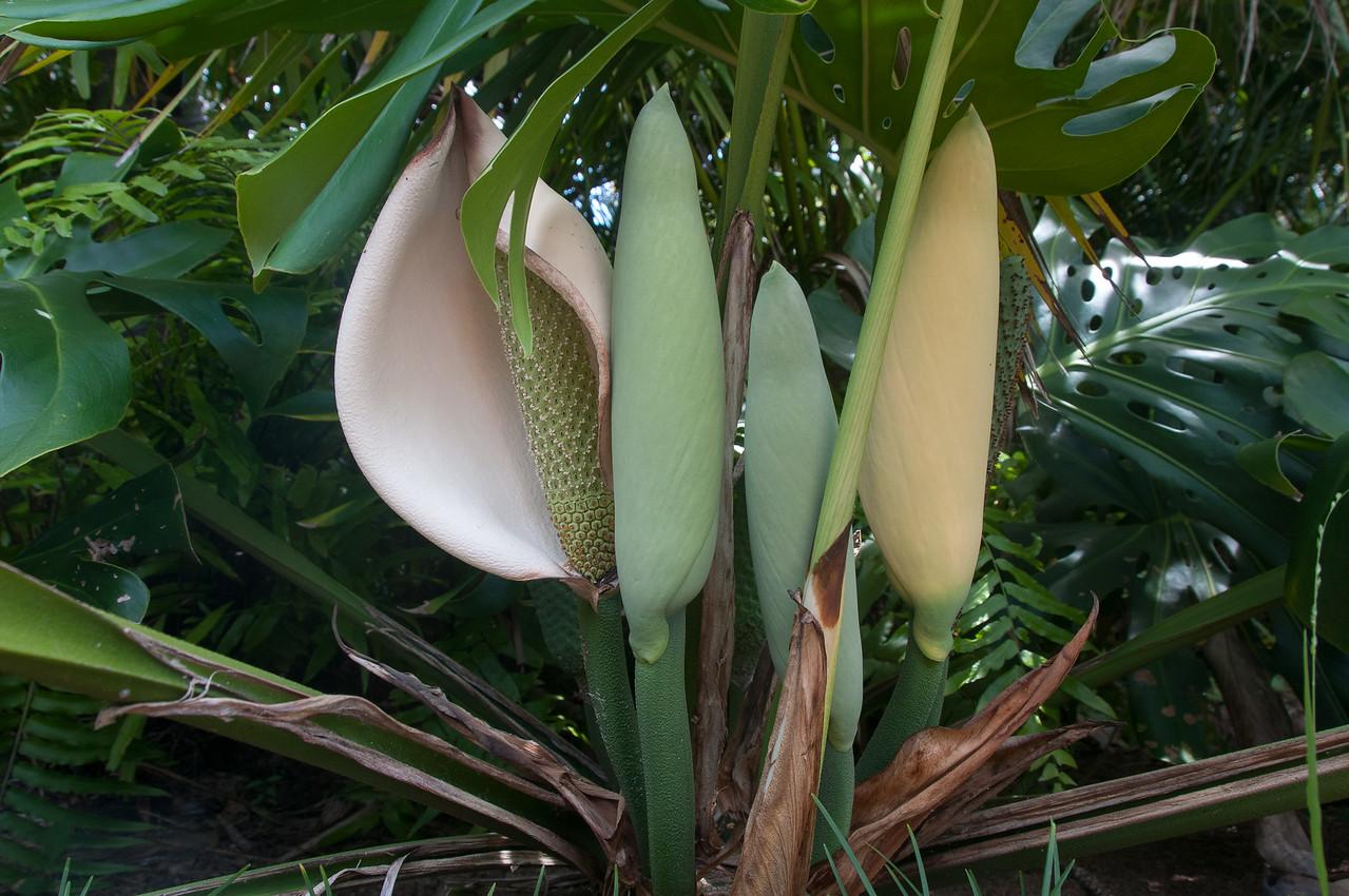 Plants in Lord Howe Island