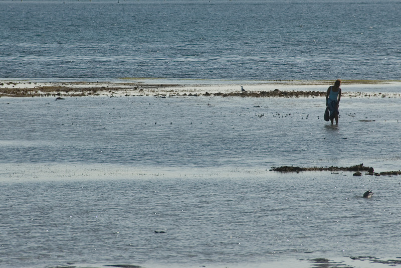 Foraging at Low Tide 2 - New Caledonia