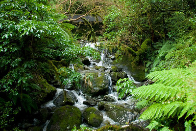 Stream - Milford Sound, NZ