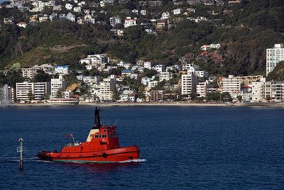 Tug in Wellington harbor