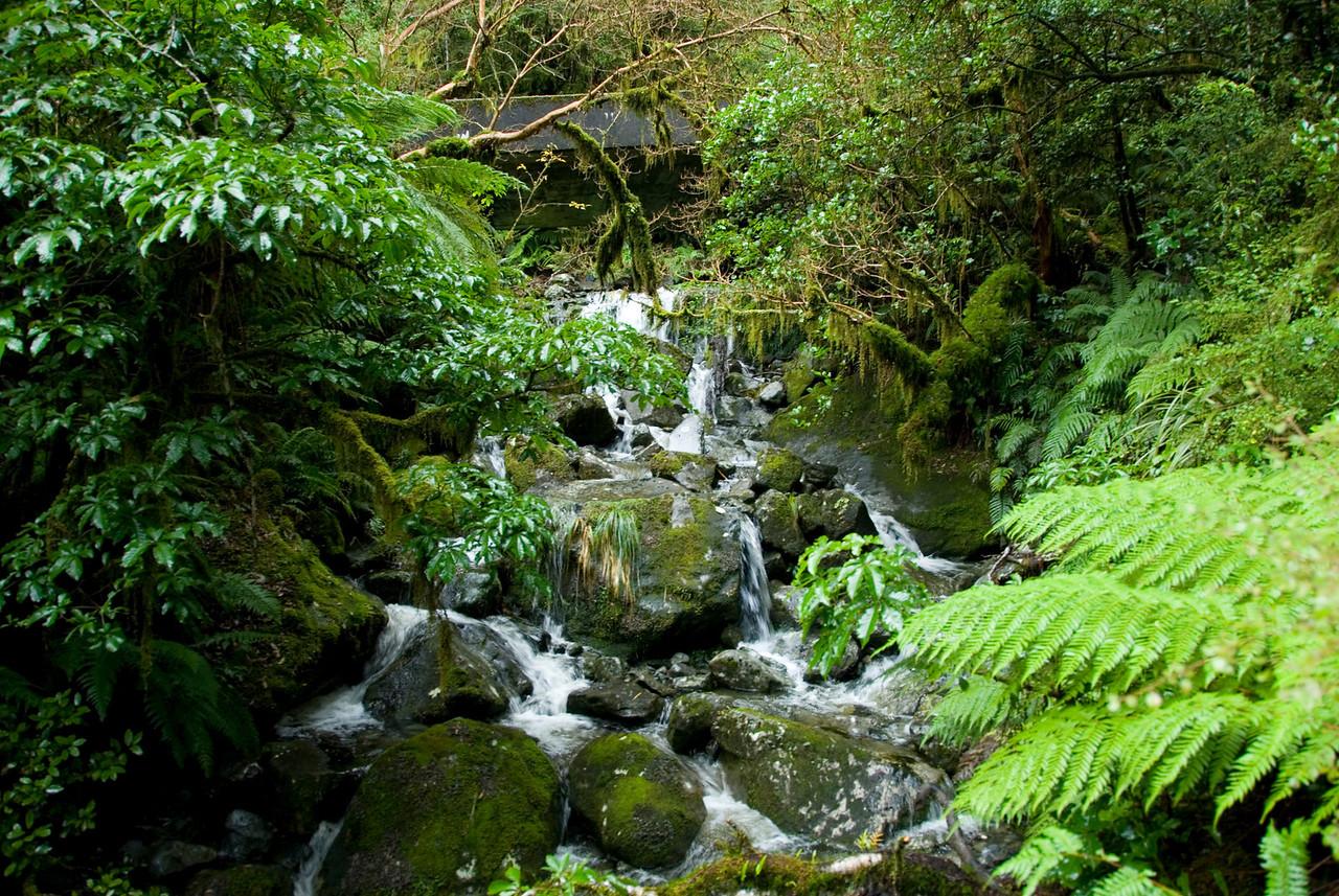 Stream - Milford Sound, NZ