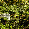 A severely overgrown road is spotted on the Manoa Falls trail