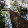A massive tree on the hike