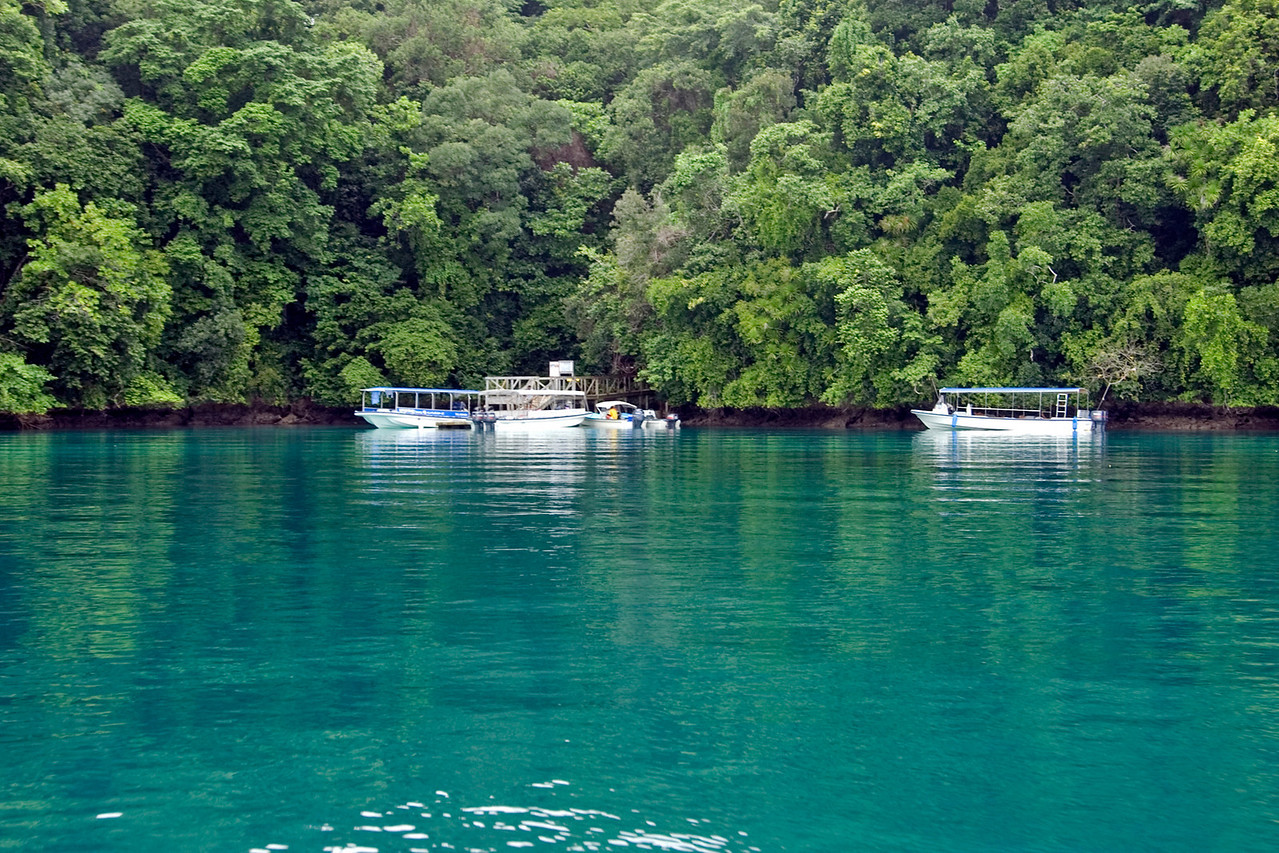 Jellyfish Lake Dock - Palau