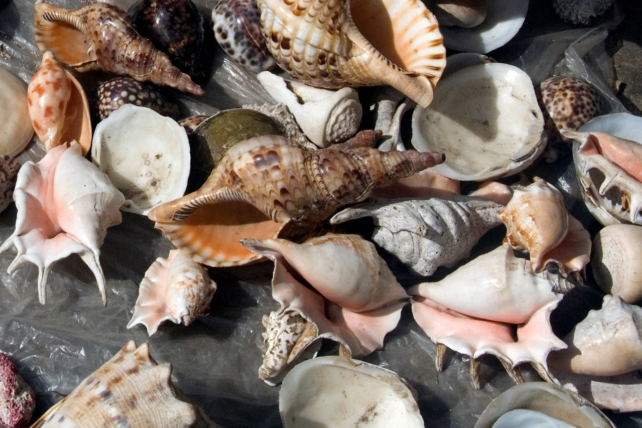 Selling Seashells by the Seashore, Honiara - Solomon Islands