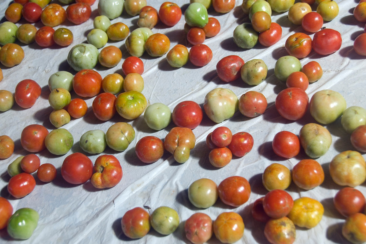 Tomatoes at Market, Honiara - Solomon Islands