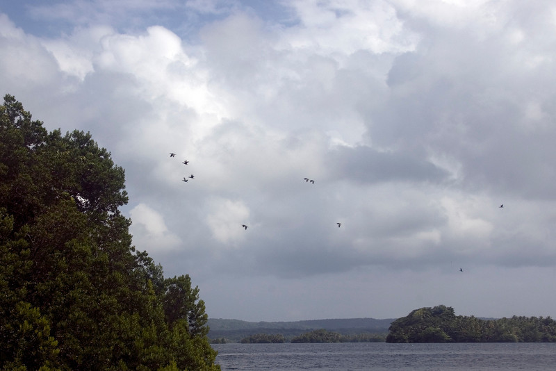 Bird Flock on Lake, Rennell Island - Solomon Islands