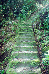 Stairs to Old Port #1, Rennell Island - Solomon Islands