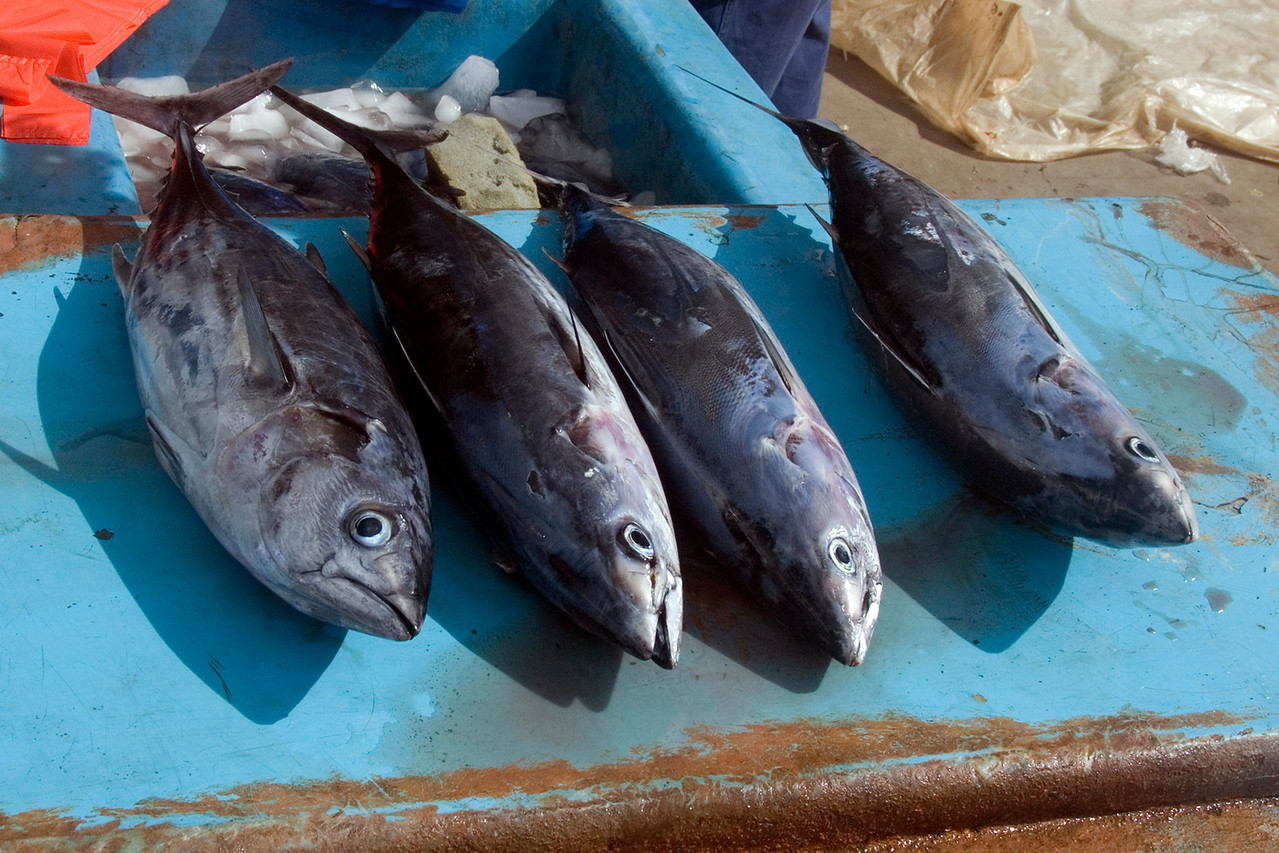 Fish at Market, Honiara - Solomon Islands
