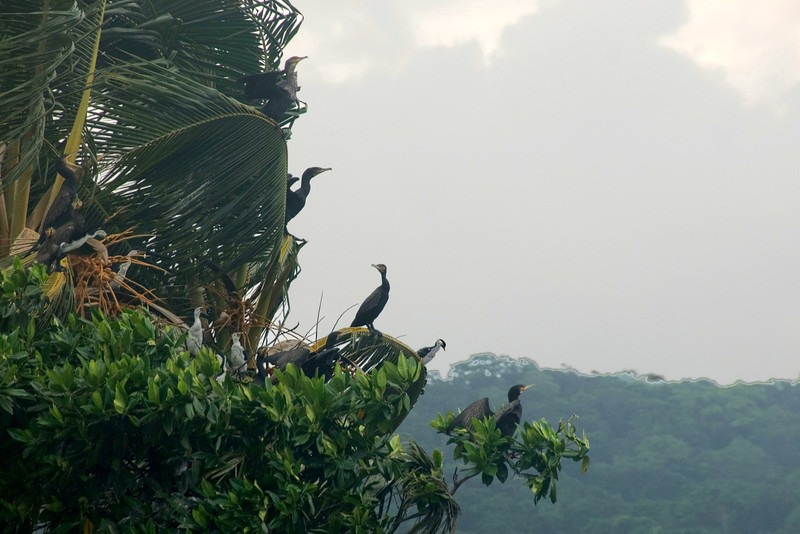 Birds on Island, Rennell Island - Solomon Islands