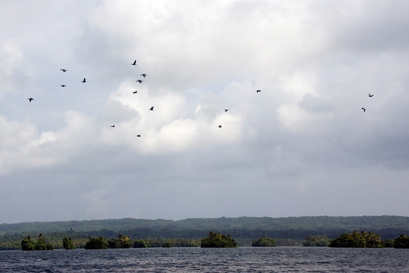 Flock of Birds, Rennell Island - Solomon Islands