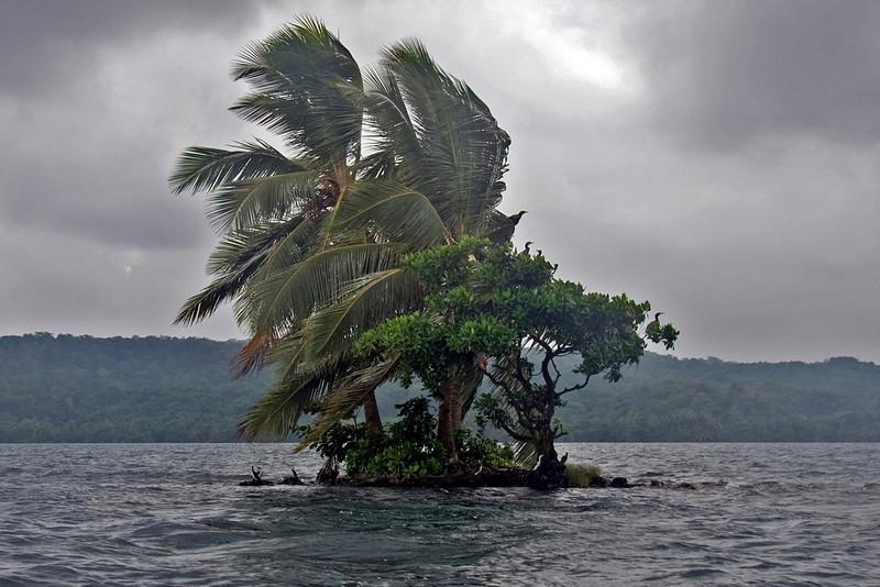 Small Island, Lake Tenago - Rennell Island