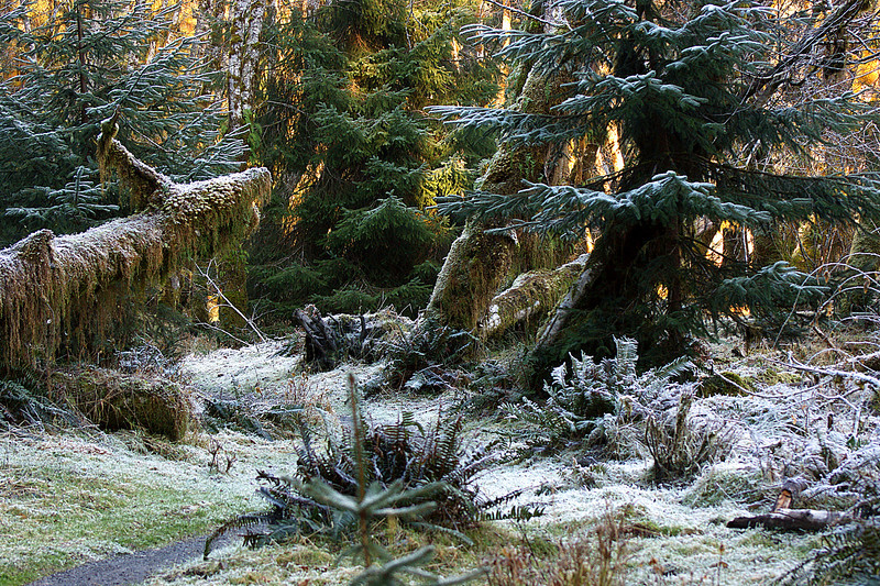 Photo By Bob Bodnar........................Hoh Rain Forest, Olympic National Park