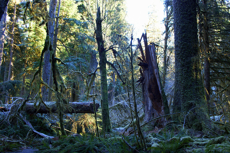 Photo By Bob Bodnar.................Hoh Rain Forest, Olympic National Park