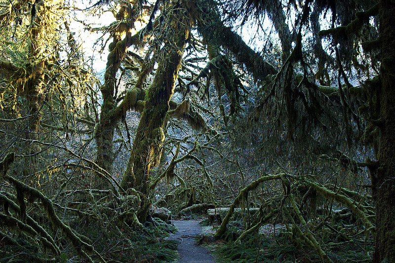 Photo By Bob Bodnar...................Hoh Rain Forest, Olympic National Park