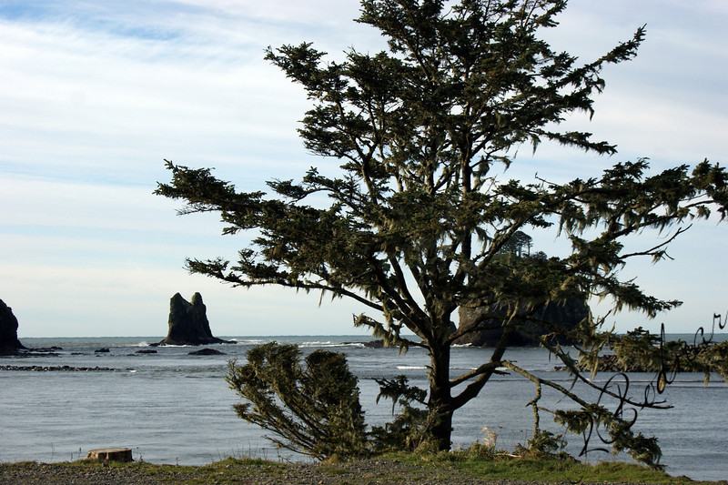 Photo By Bob Bodnar......................................La Push WA.