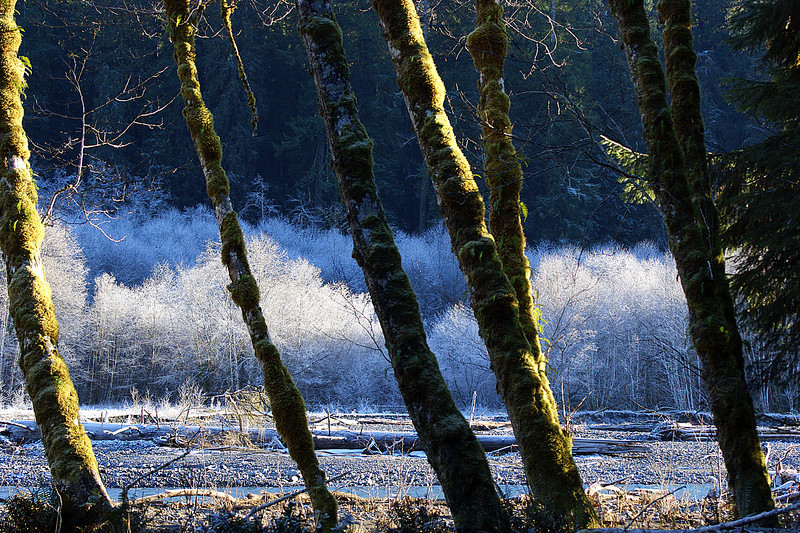 Photo By Bob Bodnar.....................Heavy Frost Just out side Hoh Rian Forest