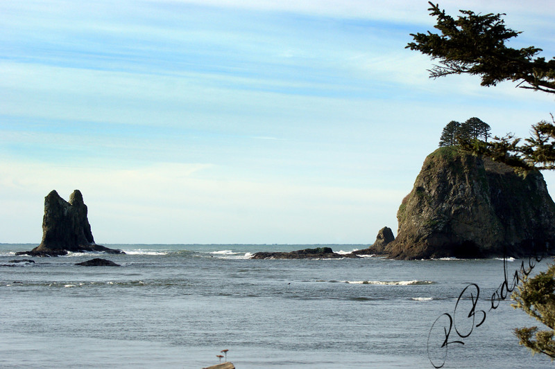 Photo By Bob Bodnar...................................La Push WA.