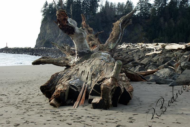 Photo By Bob Bodnar......................Giant Driftwood On The Beach at La Push WA.
