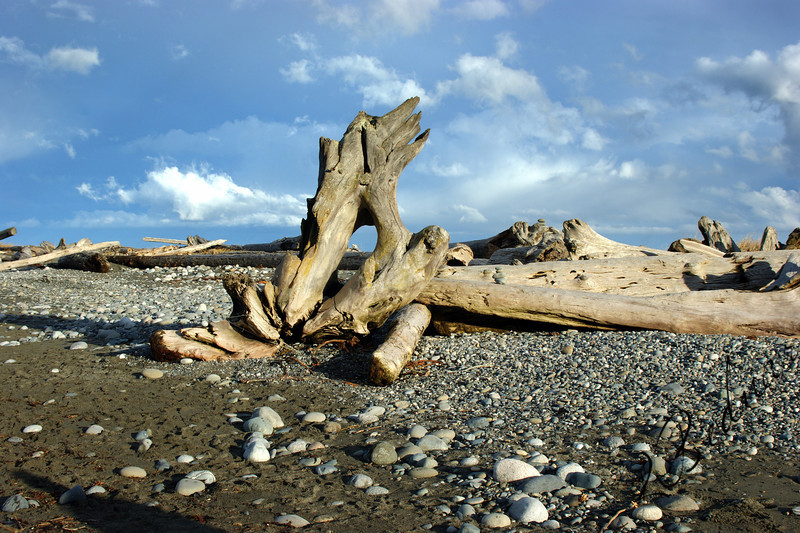Photo By Bob Bodnar.....................  Driftwood on Dungeness Spit