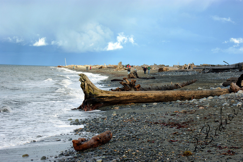 Photo By Bob Bodnar...................Now this is some Big Driftwood