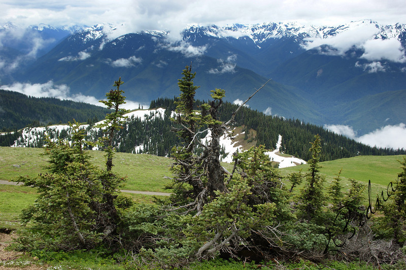 Photo By Bob Bodnar............ Hurricane Ridge