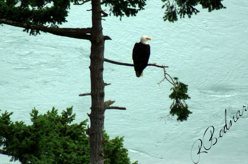 Photo By Bob Bodnar...........Standing Guard at Deception Pass, Whidbey Island WA.