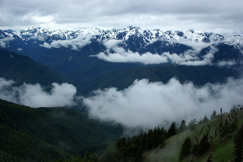 Photo By Bob Bodnar...............Hurricane Ridge