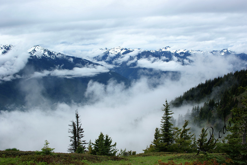Photo By Bob Bodnar..................Hurricane Ridge