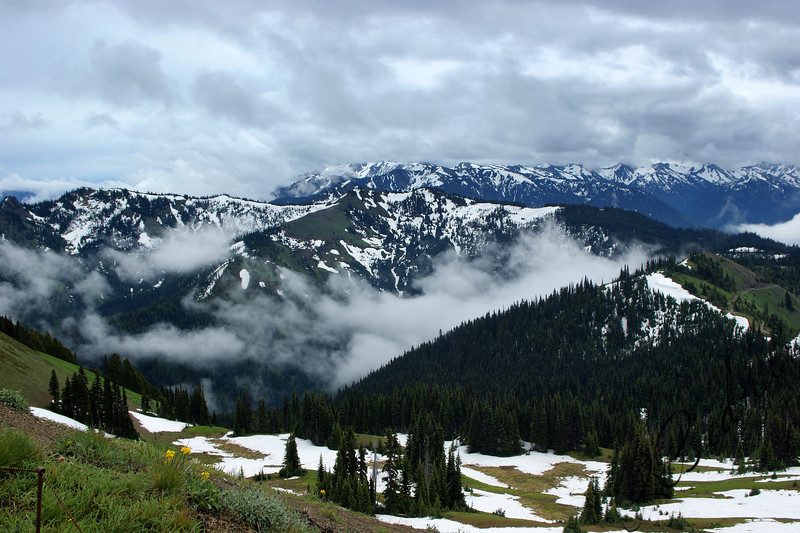 Photo By Bob Bodnar...................Hurricane Ridge, Port Angeles WA.