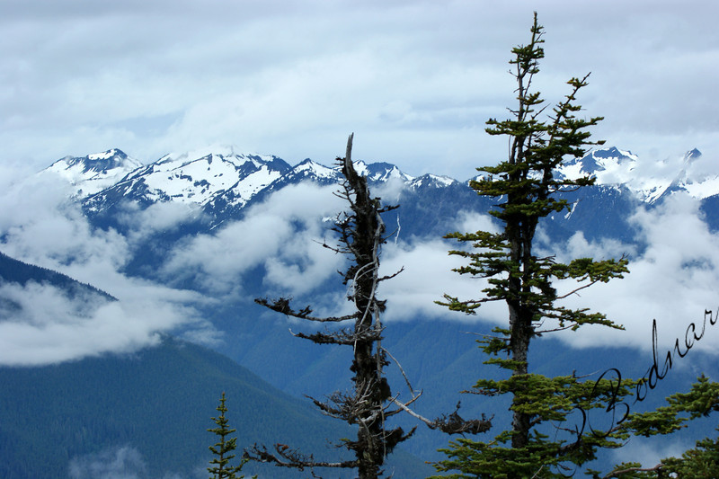 Photo By Bob Bodnar.........................Hurricane Ridge