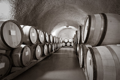 Wine barrels in the cellar of Archery Summit Vineyards
