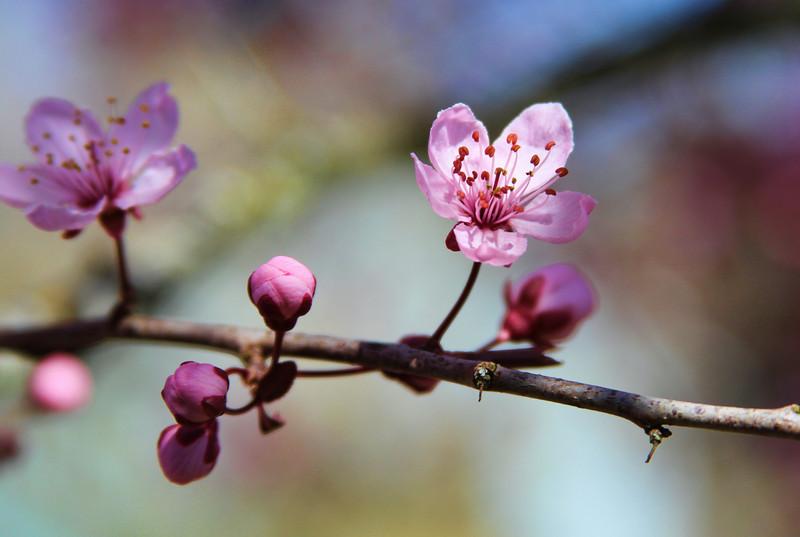 Spring Bokeh12