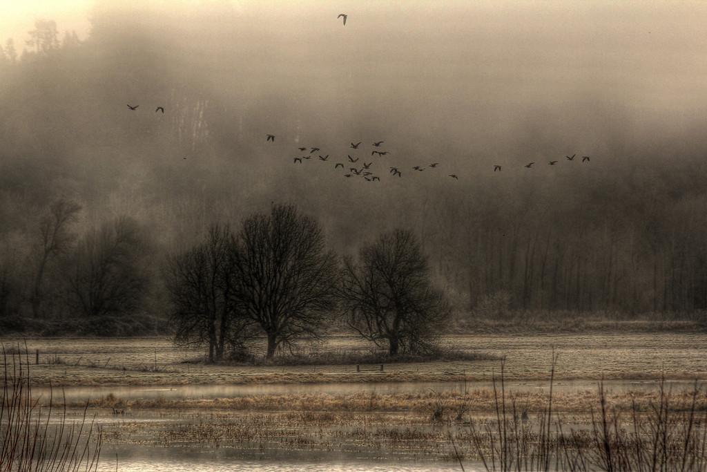 foggy refuge
