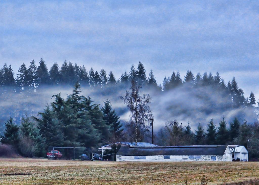 HWY 503 fog