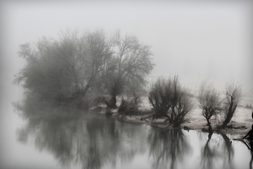 foggy overlook Refuge