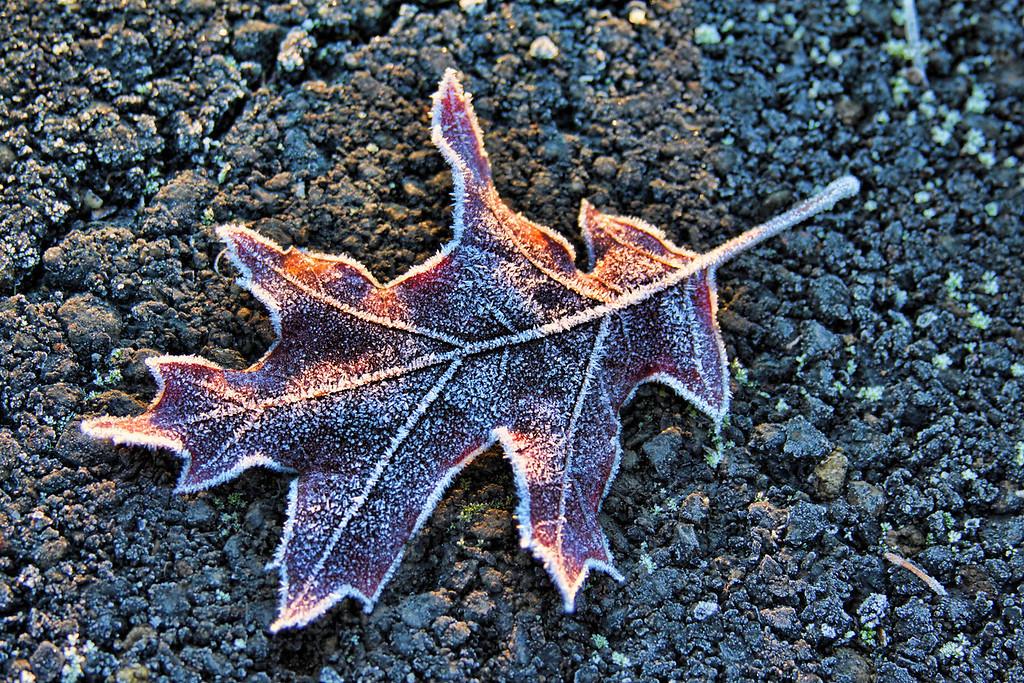 dramatic Leaf