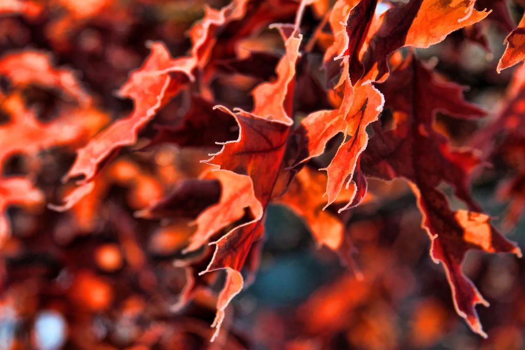Fall leaves dancing