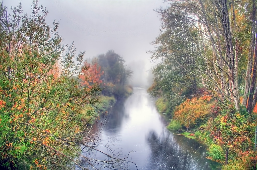Salmon Creek Fog