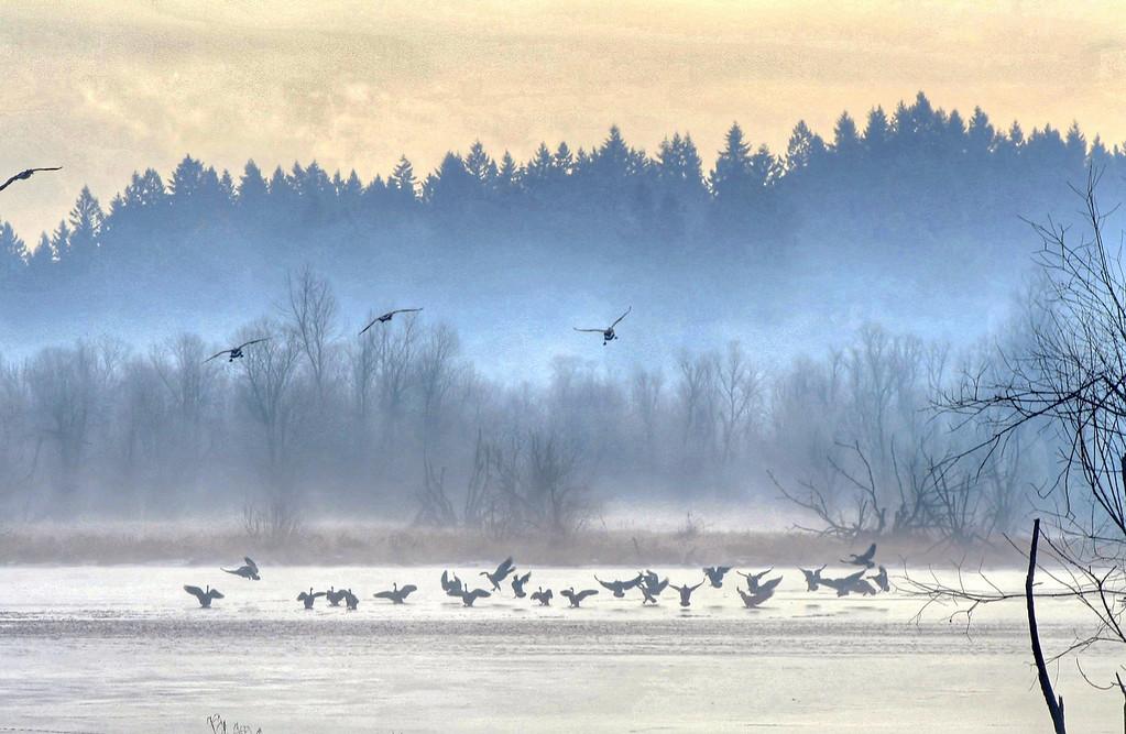 Dance of the Ducks