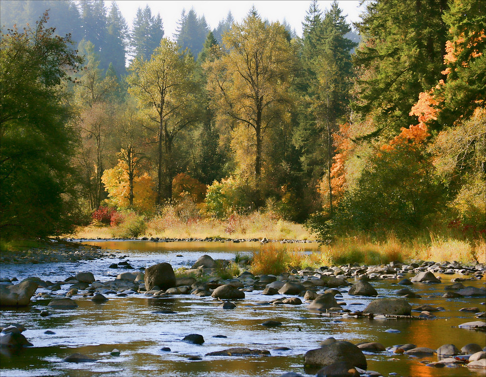 lewis river soft