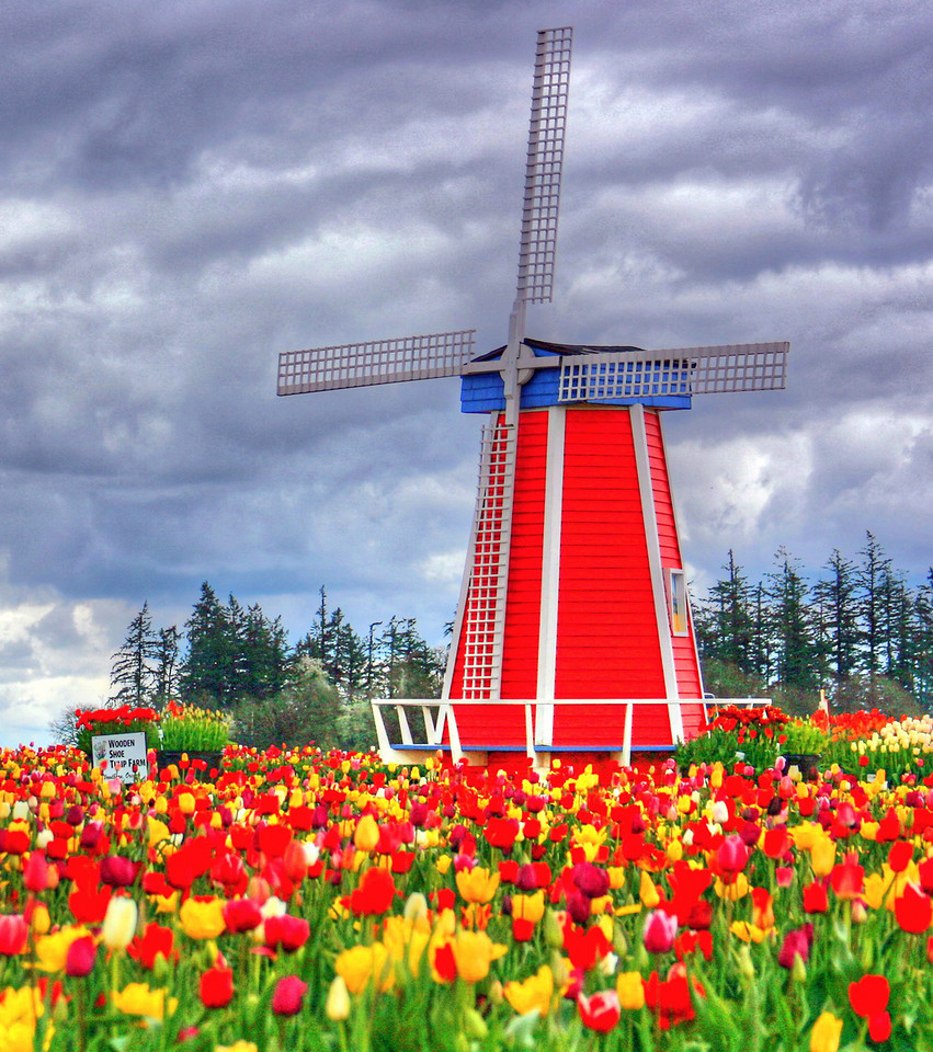 Windmill Portrait